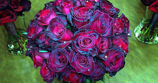 Thee Most Beautiful Bouquet Of Black Baccara Roses I Have