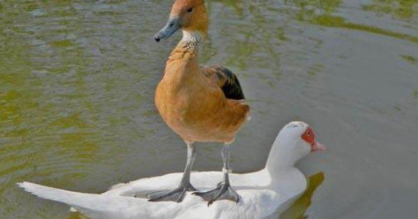 Imgend Funny Animal Jokes Animals Funny Birds
