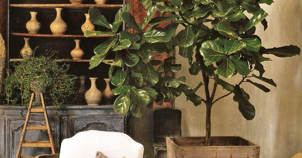 Great indoor plants gardening yard ideas pinterest indoor plants and gardens - Great indoor houseplants ...