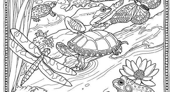 lily pad pond coloring pages - photo#4