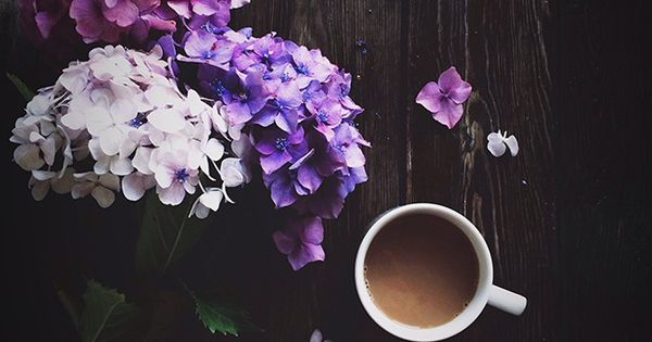 Morning coffee and the most beautiful hydrangeas from my friend's garden