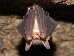 Pin By Teri Storey On Fun In The Garden How To Attract Bats Garden Pest Control Natural Pest Control