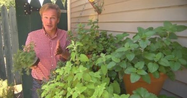 How to arrange herbs in containers at home with p allen smith fruit herb raised bed - P allen smith container gardens ...