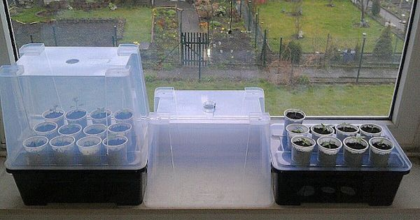 mini greenhouse a clever hack to get seedlings started. Black Bedroom Furniture Sets. Home Design Ideas