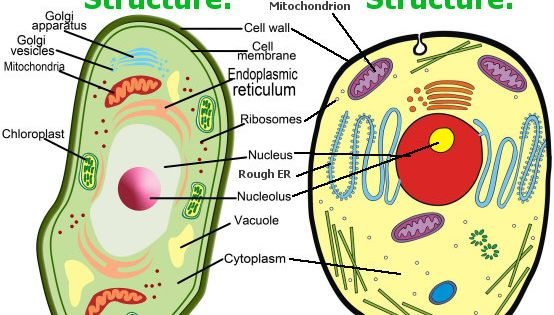 Animal Cell Model Diagram Project Parts Structure Labeled Manual Guide