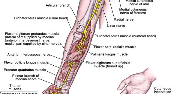 Below knee amputation anatomy