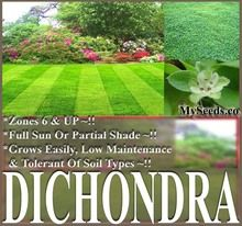 Dichondra Lawn Grass Seed Grows Easily In Full Sun Or Partial Shade Low Maintenance Zones 6 Up Grass Seed Lawn Maintenance Low Maintenance Landscaping