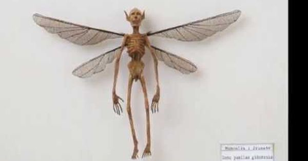 real evidence of fairies or human insect skeleton - tiny aliens, Skeleton