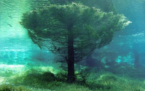 Submerged tree in the Green Lake Austria The Green Lake or Grüner