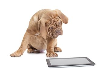 2 Reasons Dogs Chew Cell Phones 5 Tips To Help Dog Chews Dog