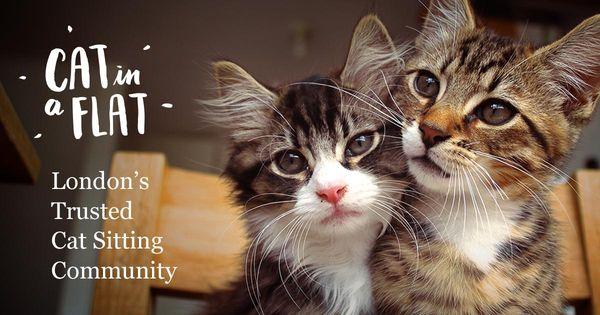 Cat - cute photo