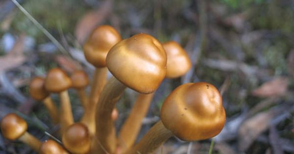 951f283ef1013188fd3f4e86ac3aacbe - How To Get Rid Of Toadstools In Your Lawn