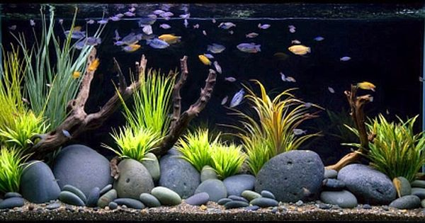 freshwater aquariums 1 by aquarium design group blue aquarium axolotls pinterest