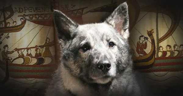 Viking Dogs Followed Their Masters To Valhalla Female Viking Names Norse Mythology Names Dogs