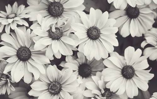 The gallery for --> Tumblr Black And White Daisies
