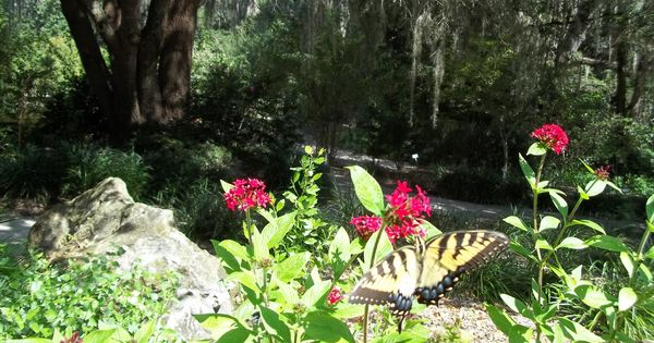 Butterfly At Kanapaha Botanical Gardens Gainesville