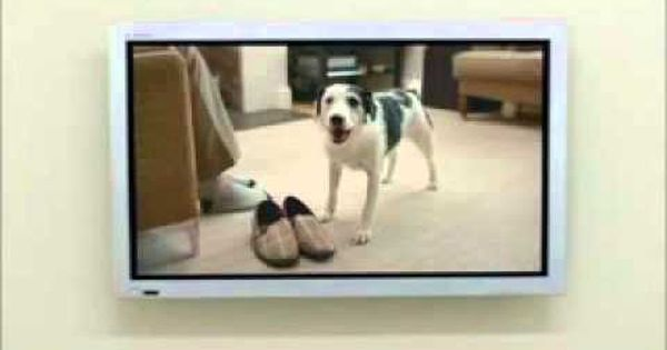 Every home needs a harvey funny dog adoption commercial for Every dog needs a home