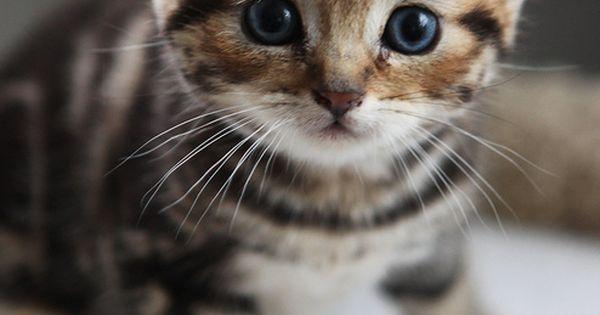 so cute! cat tabby kitten
