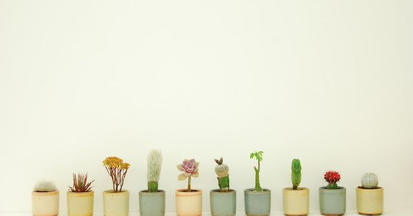 I'd love a cacti garden (in this lovely pastel pots) on my