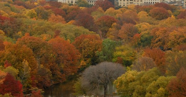 NYC. Central Park in the fall. autumn Places I want to see