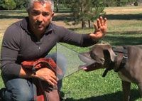 How To Bond With Your Dog Cesar S Dog Training Video Dog Food