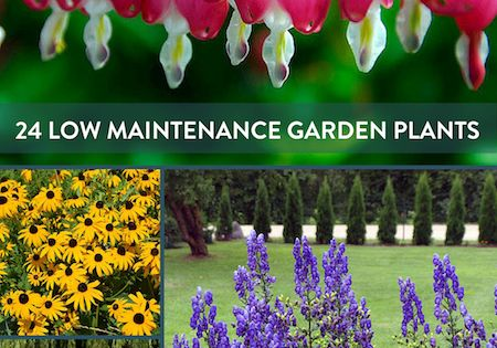 Round up 24 of the best low maintenance plants for your for List of low maintenance plants