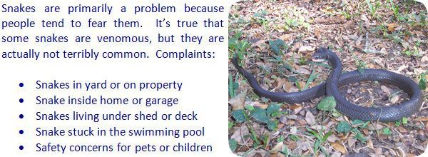 How To Get Rid Of Snakes In The House Or Yard Keep Snakes Away Snake How To Get Rid