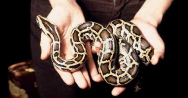 73171 Reptiles Animals Snake