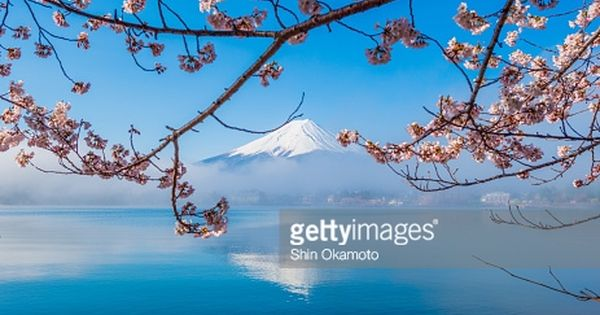 A Small Group Of Cherry Trees On The Ubuyagasaki Peninsula Next To Cherry Tree Photo Stock Photos