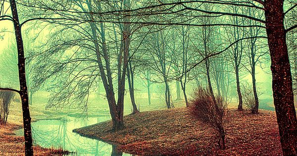 ~~Into the wildy dream ~ forest river, Zurich, Switzerland by Osvaldo Mirante~~