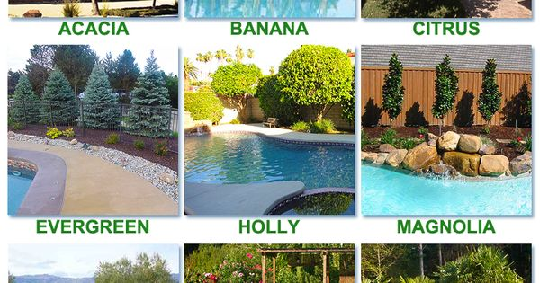 Best worst trees to plant around a pool swimming pool Best plants for around swimming pools