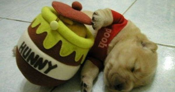 poohbear puppy
