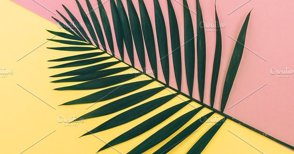 palm leaf on pink and yellow background. fashion minimalism