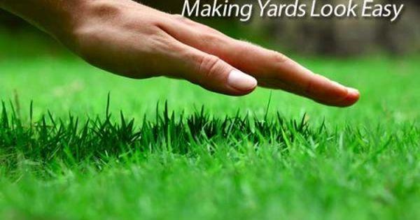 St Augustine Grass Care Florida Fertilizer Lawn Maintenance Schedule Lawn Care Spring Lawn Care Lawn Care Tips
