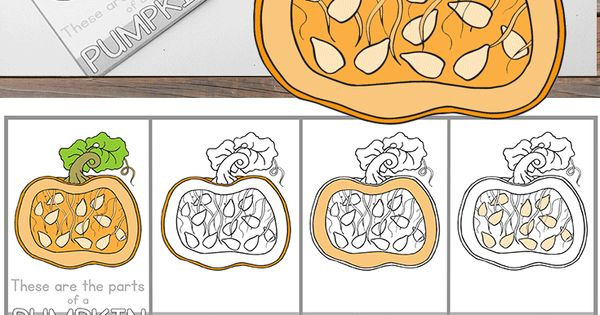 Free Parts Of A Pumpkin Montessori Nomenclature Cards