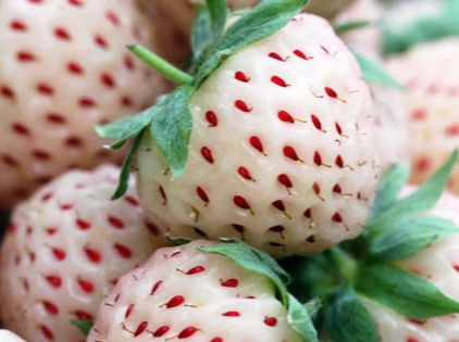 Not a recipe (obviously - but something to try) Pineberry. A white