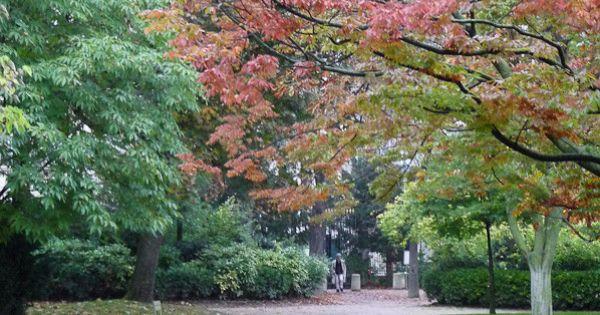 L automne au jardin du luxembourg paris 6e http www for Arbres jardin du luxembourg