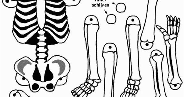 Another skeleton printable
