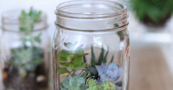 pflanzen terrarium im ball mason glas das gro e glas ist. Black Bedroom Furniture Sets. Home Design Ideas
