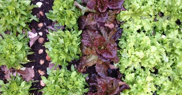 Tips for a thriving vegetable garden even in cold weather - Tips for a lovely garden ...