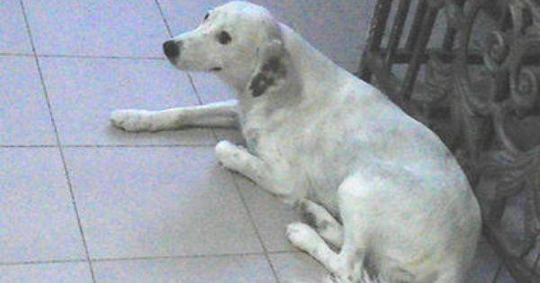 Mixed Breed Dog For Adoption 7 Years 6 Months White Mongrel Dog Adoption Dog Breeds Dogs