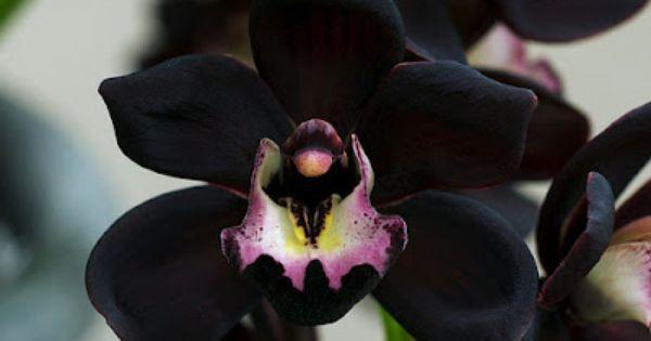 Orchid bouquet - photo