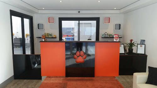 Dog Daycare Reception Area Google Search Dog Daycare Pamper Pets Dog Daycare Business
