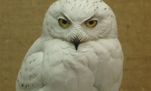 Snowy owl carved by bob guge wood carvings around the