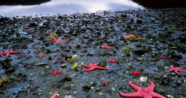 Starfish Colony, West Coast of New Zealand This place looks awesome