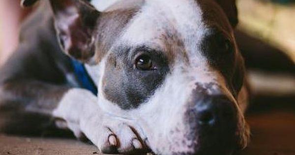Austin Pets Alive Home Austin Pets Alive Pets Animal