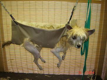Groomers Bbs Homemade Sling And Gh Dog Sling Diy Dog Stuff