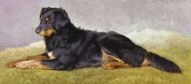 This Beautiful Black And Tan Collie Called Fern Belonged To