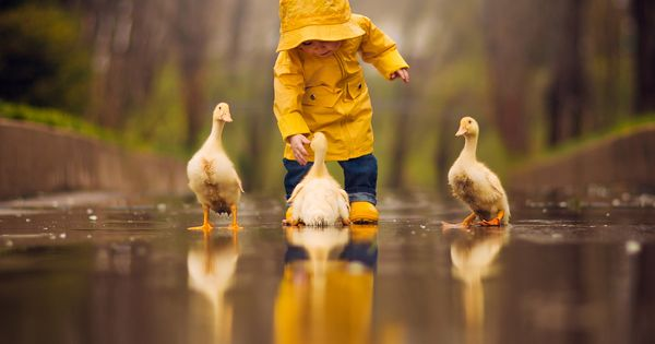 Making memories in her yellow raincoat with her yellow duck friends in