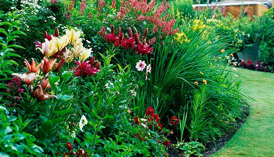 Sunny landscape ideas plants and gardens for Sunny landscape designs